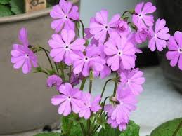 Japanese Flowers Pictures - 25 best flowers and their meanings ideas on pinterest flower