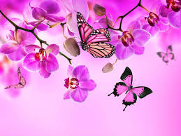 orchid butterflies pink color flowers wallpaper 5000x3750