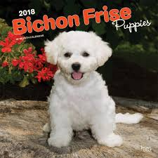 bichon frise breeders bichon frise puppies wall calendar 2018 browntrout calendars