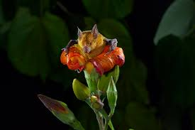 Flower by See One Of Earth U0027s Driest Places Experience Rare Flower Boom