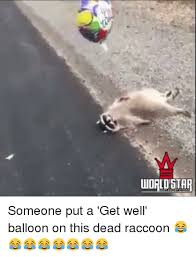 Funny Raccoon Meme - uudrldstar someone put a get well balloon on this dead raccoon