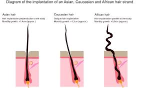 pictures of thick pubic hair why is human beard hair so much coarser than either body hair or
