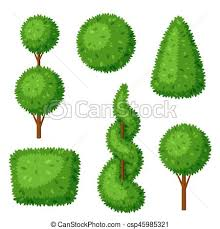 vector illustration of boxwood topiary garden plants set of