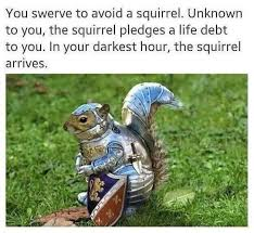 Squirrel Meme - the squirrel always pay their debt wholesome memes know your meme