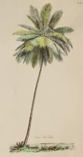 palm tree art print antique botanical art by victorianwallart