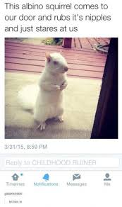 Albino Meme - albino squirrel