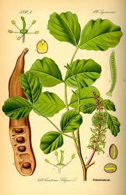 Sweet Flag Herb 217 Best Garden Biblical Images On Pinterest Healing Herbs