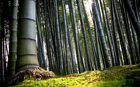 high definition wallpapers hd 1920 1080 bamboo trees forest high definition wallpapers hd 1920 1080 bamboo trees forest