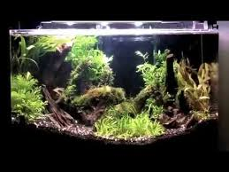 Plants For Aquascaping How To Aquascape A Planted Aquarium With Low Light Plants And Diy