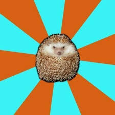 Hedgehog Meme - create meme autistic hedgehog memes create meme pictures
