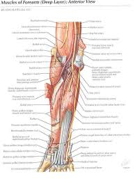 Foot Anatomy Nerves 68 Best Anatomy Images On Pinterest Physical Therapy Massage