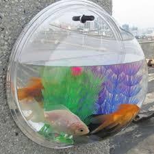 Beta Fish In Vase Creative Hanging Wall Vase Acrylic Semicircular 185mm Glass Flower