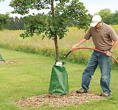 bags for trees