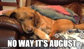 Back To School Meme - back to school meme golden retriever no way it s august