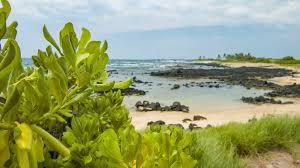 hawaii native plants indigenous flora at beachfront of kona island in hawaii with green