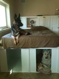 chambre pour chien une chambre pour chien