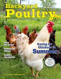 summertime chicken care 101 backyard poultry summer e edition