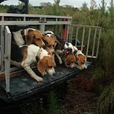 dog hunting truck keep all dog hunting legal home facebook