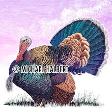 what color are turkey s drawing info scratchboard and