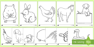 maths colouring sheets ks4 barn owl facts and fun for kids the