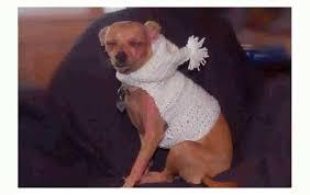 crochet pattern for dog coat dog sweater crochet pattern easy youtube