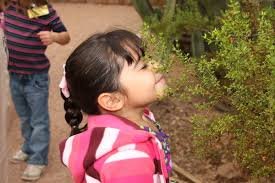 Scottsdale Az Botanical Gardens by Desert Botanical Garden Offers Wide Variety Of Classes For Kids