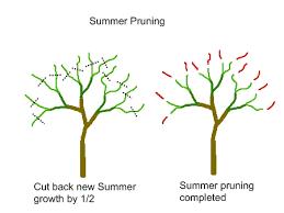 Backyard Orchard Culture Deep Green Permaculture - Backyard orchard design