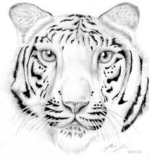 excellent tiger coloring pages top child color 649 unknown