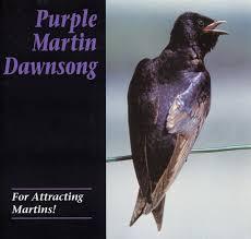 martin conservation dawn song cd purple martin attractors