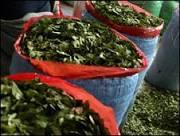 BBC Brasil - Notícias - Com traços de cocaína, refrigerante da Red ...