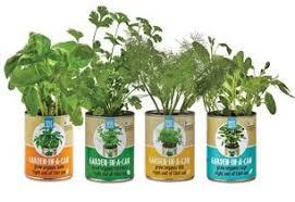Indoor Herbal Garden Indoor Gardening Kits U2013 Back To The Roots Official Site