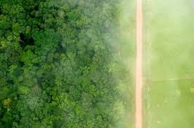 global tree cover loss 51 percent in 2016 world resources