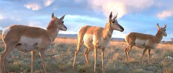 New Mexico wildlife images New mexico chapter about the wildlife society jpg
