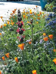 native plants list pacific horticulture society a small urban native wildflower garden