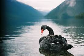 how does government get away from black swan it projects