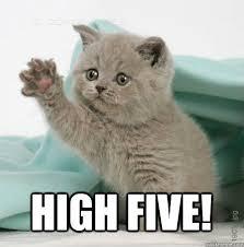 High Five Meme - high five high five cat quickmeme