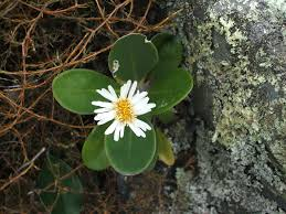 native plants to new zealand new zealand native plants ordinarygoodness