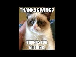 cat thanksgiving memes