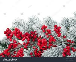 christmas tree natural red berries close stock photo 67338364