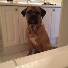 Dogs In The Bathtub First Time My Dog Saw Me In The Bathtub She Was So Worried She Had