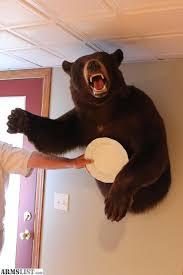 Taxidermy Bear Rug Armslist For Sale Taxidermy Mounts Cougar Bear Elk