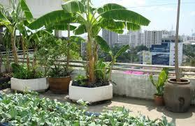 roof garden plants start a refreshing rooftop kitchen garden