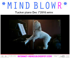Piano Meme - mind blowr meme 1 dog piano by internet meme on deviantart