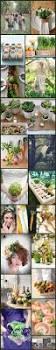 Vegetable Garden Blogs 19 best succulent plants for wedding favors images on pinterest