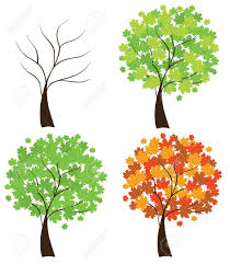 maple tree symbolism trees in different seasons four season maple trees tree hand