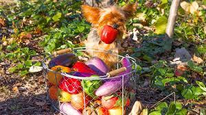 amazing fall garden harvest backyard organic gardening youtube