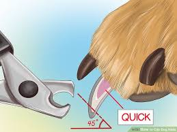 veterinarian approved advice on how to clip dog nails wikihow