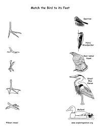 54 best apologia birds bats u0026 flying creatures of the fifth day