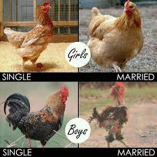 Hen Meme - single vs married know your meme