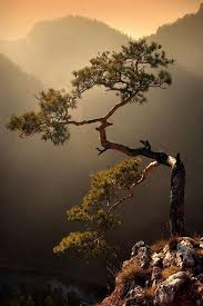 mobile hd wallpapers alone tree mountain mobile hd wallpapers
